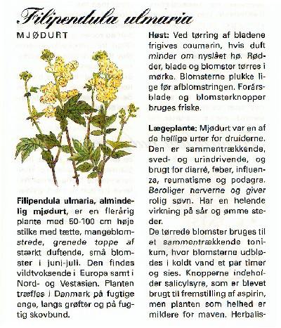 mjodurt_1_l